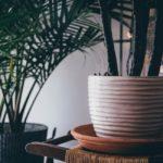 Indoor plants (1) (1)