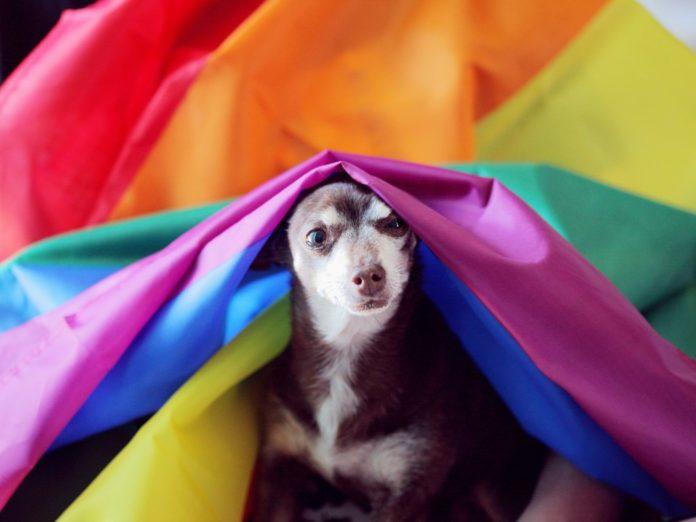Rainbow Dog Show